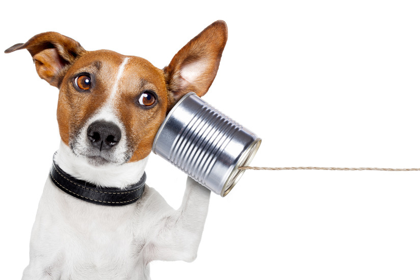 Kontakt-Hundi